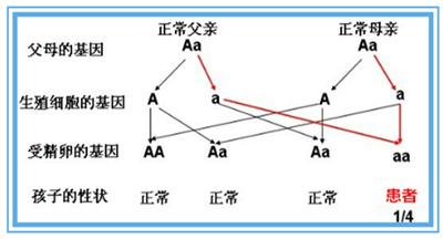遗传谱系图